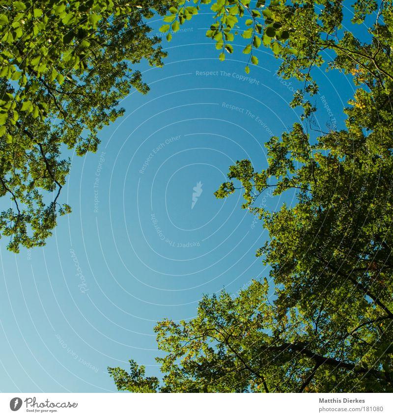Lichtung Baum Wald Waldlichtung Blatt grün Himmel Herbst oben Trennung kaputt Kriegsschauplatz Mittag Morgen Rahmen Natur Ast