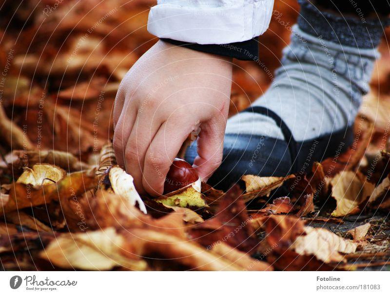 Meine Kastanie! Mensch Kind Natur Hand Baum Pflanze Mädchen Umwelt Herbst Garten Fuß Park braun Erde Wind Finger