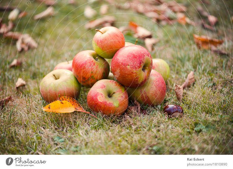 Äpfel, Herbst, Kastanien II Natur Farbe grün rot Erholung Blatt Wärme gelb Glück braun Frucht Zufriedenheit rund Frieden Apfel Geborgenheit