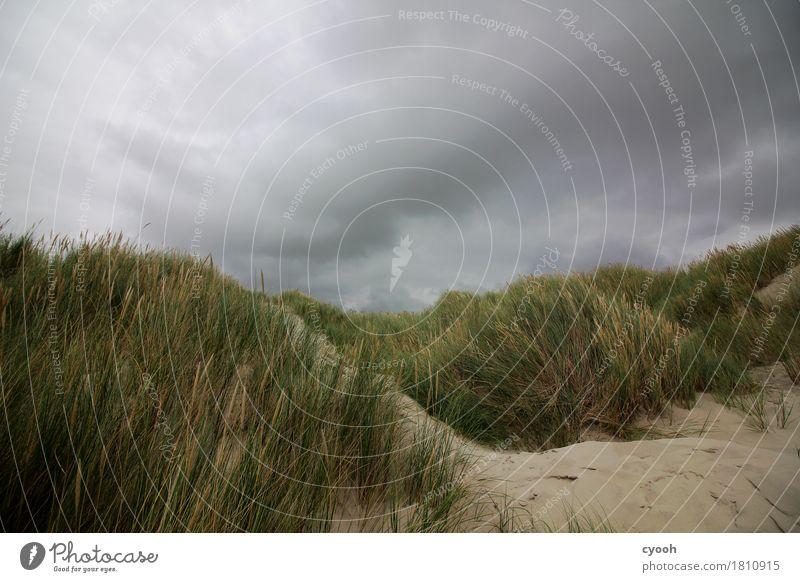 In Sturmrichtung Natur Landschaft Urelemente Sand Wolken Gewitterwolken Wetter schlechtes Wetter Unwetter Wind Strand bedrohlich dunkel nass Angst gefährlich