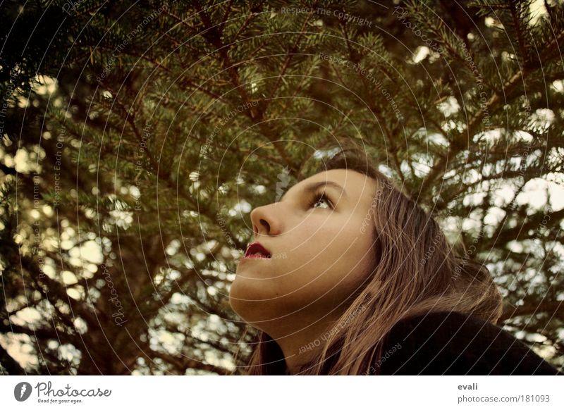 Up Frau Mensch Natur Jugendliche Baum grün Gesicht Wald feminin Haare & Frisuren Kopf braun Erwachsene beobachten Neugier Junge Frau