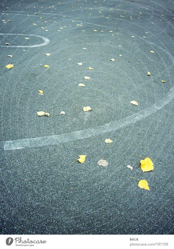 LAUF DER GEZEITEN blau Blatt Herbst Straße kalt Wand Umwelt Stein Mauer Traurigkeit Linie Zeit Beton liegen Boden Straßenbelag