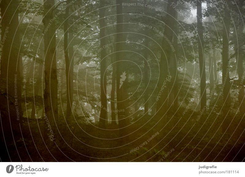 Morgens Farbfoto Außenaufnahme Morgendämmerung Umwelt Natur Klima Wetter Nebel Pflanze Baum Wald bedrohlich dunkel gruselig natürlich geheimnisvoll