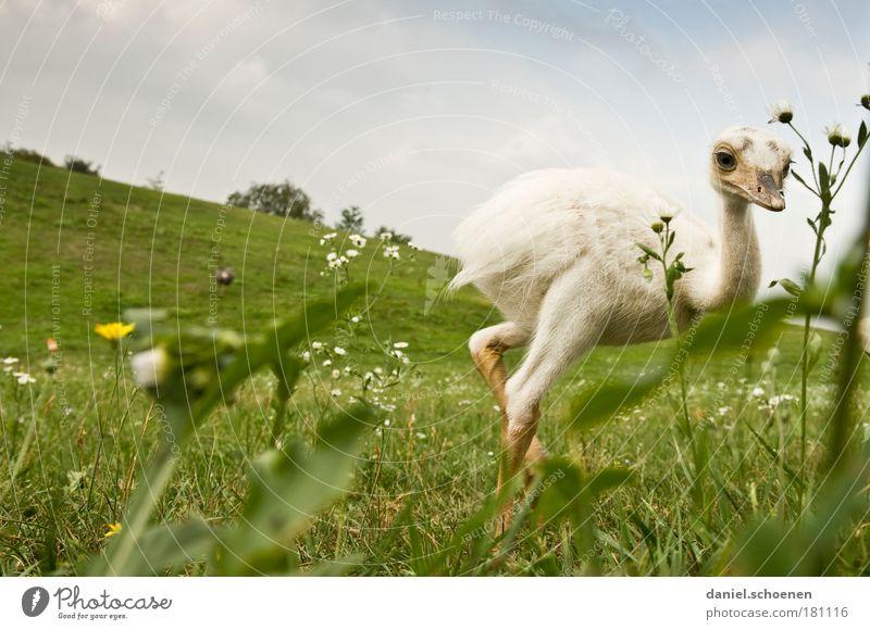 Papparazzi schön Tier Leben Vogel Coolness Leichtigkeit frech Tierjunges