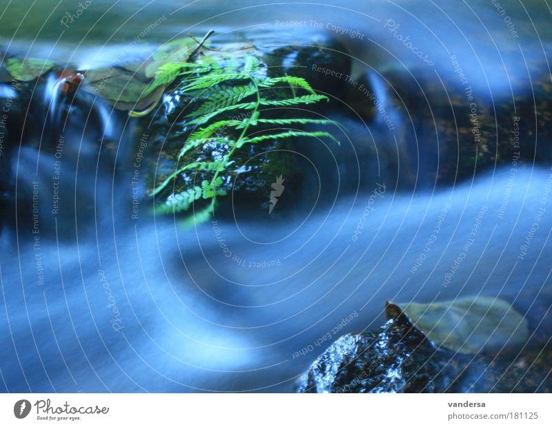 Die Wilde Weißeritz bei Höckendorf - Sachsen Natur Wasser Blatt Umwelt Landschaft Herbst Wellen Fluss Flussufer Dynamik Bach Farn Gewässer