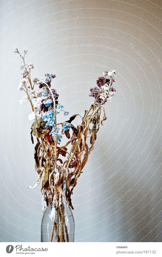 verwelkt Farbfoto Gedeckte Farben Innenaufnahme Textfreiraum oben Tag Natur Pflanze Blume alt Duft trist Romantik Tod Vergänglichkeit Dekoration & Verzierung