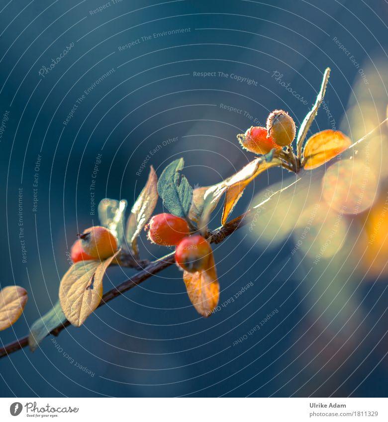 Herbst Farben elegant Design Garten Innenarchitektur Dekoration & Verzierung Tapete Bild Leinwand Postkarte Natur Pflanze Sonnenaufgang Sonnenuntergang