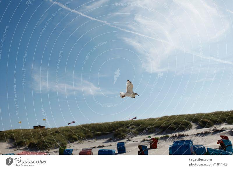 TSCHÜSS MÖWN. ... IG WAATE. Meer Strand Ferien & Urlaub & Reisen Tier Erholung Freiheit Sand Vogel Deutschland Wind Pause Frieden Feder Stranddüne Düne Möwe