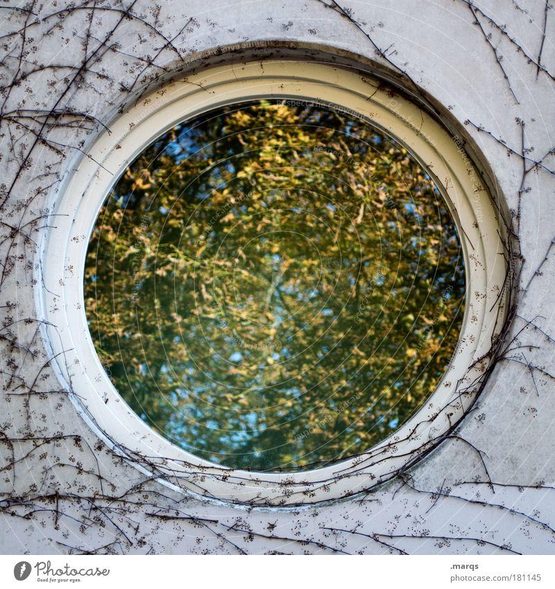 Herbst Farbfoto Außenaufnahme Experiment abstrakt Strukturen & Formen Ausflug Natur Pflanze Baum Sträucher Gebäude Fassade Fenster Beton Glas verblüht