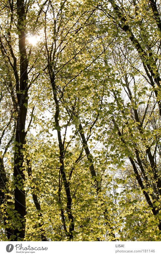 sommersonne Natur Himmel weiß Baum Sonne grün blau Pflanze Sommer Blatt schwarz gelb Wald Wiese Landschaft Luft