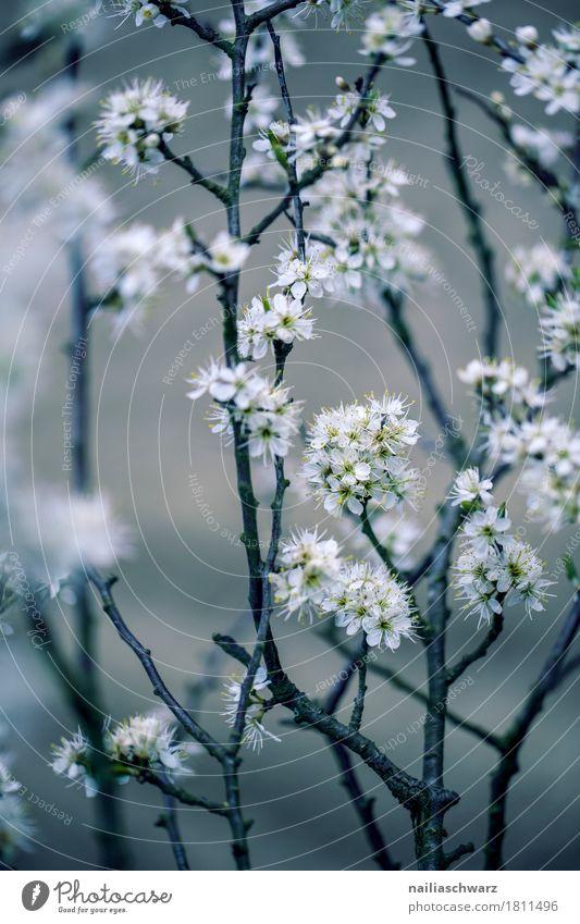 Frühling Umwelt Natur Pflanze Baum Blume Blüte Grünpflanze Nutzpflanze Wildpflanze Ast Garten Park Wiese Blühend springen verblüht Wachstum Duft frisch