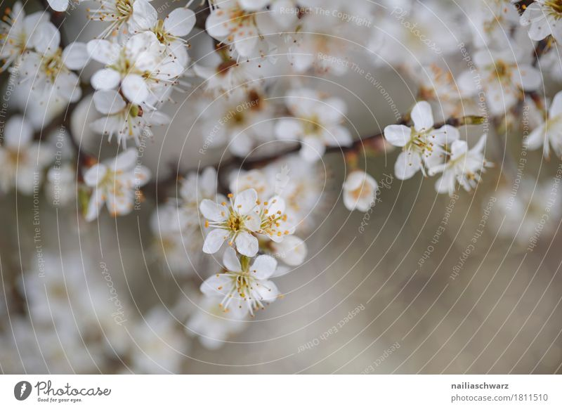 Frühling Natur Pflanze schön weiß Landschaft Blume Umwelt Blüte natürlich grau springen Wachstum Idylle Fröhlichkeit Blühend