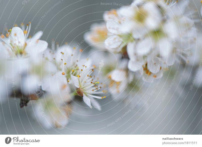 Frühling Umwelt Natur Pflanze Sommer Baum Blume Blüte Grünpflanze Nutzpflanze Ast Garten Park Wiese Blühend Duft springen Wachstum frisch natürlich weiß