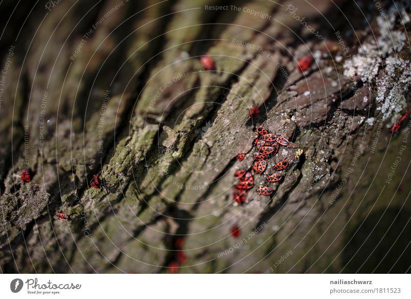 Feuerkäfer Natur Pflanze Farbe schön grün Baum rot Tier schwarz natürlich Bewegung klein Wildtier Tiergruppe Geschwindigkeit festhalten