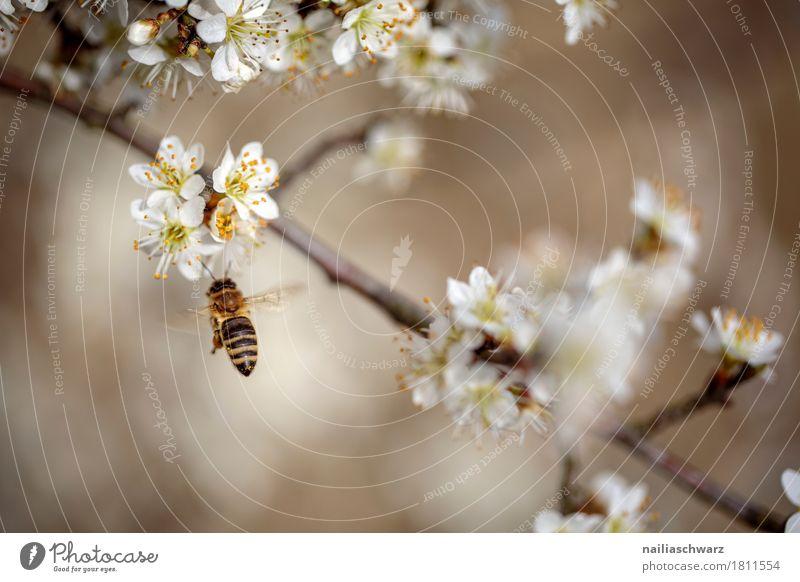Frühling Umwelt Natur Pflanze Tier Klima Klimawandel Baum Blume Blüte Ast Zweige u. Äste Haustier Biene Insekt 1 Arbeit & Erwerbstätigkeit Blühend Duft springen