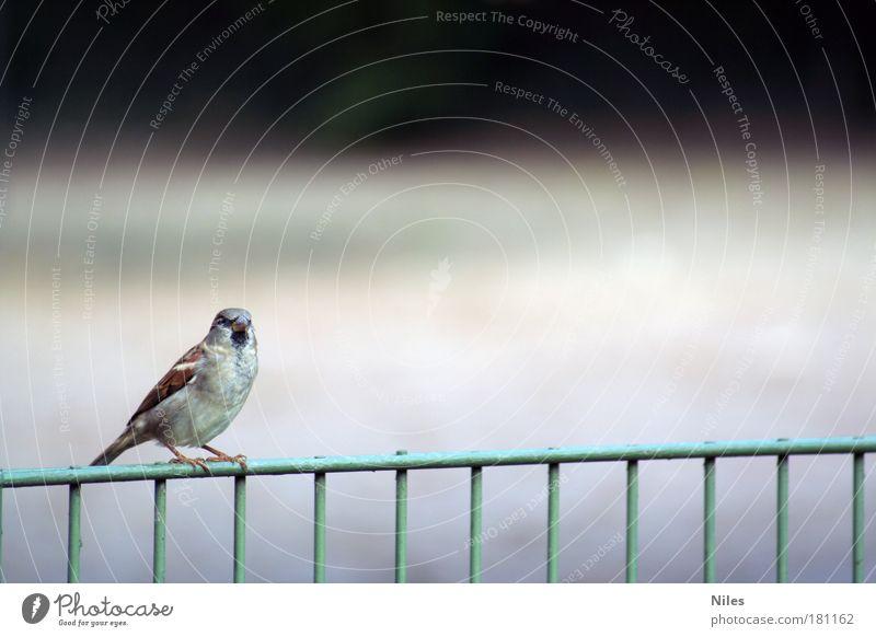 Wohin des Weges? Natur Tier Erholung Umwelt klein Garten träumen Stimmung Park Vogel Zufriedenheit warten sitzen fliegen natürlich Design