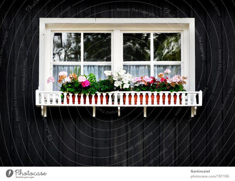 Frontal weiß grün Blume schwarz Haus Fenster Wand Mauer Deutschland rosa Wohnung Fassade Lifestyle Häusliches Leben Dekoration & Verzierung Kitsch