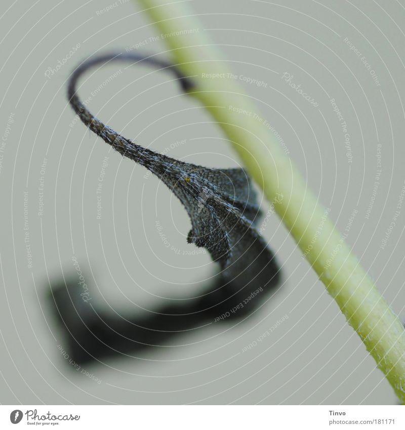 S Natur Pflanze Blatt dunkel Herbst trist Wandel & Veränderung Gesetze und Verordnungen Buchstaben Vergänglichkeit Stengel Schmerz Verfall trocken hängen