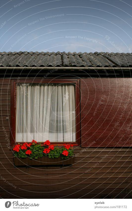 Ein Strauss Blumen vor dem Fenster Himmel alt Pflanze Wolken Haus Architektur Holz Garten Gebäude Wetter Freizeit & Hobby Fassade Klima Dach