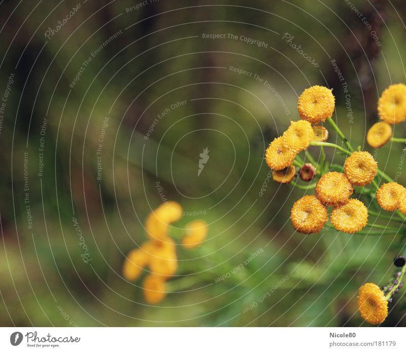 gelb gepunktete Herbstgrüße Natur Pflanze Blüte Umwelt Klima
