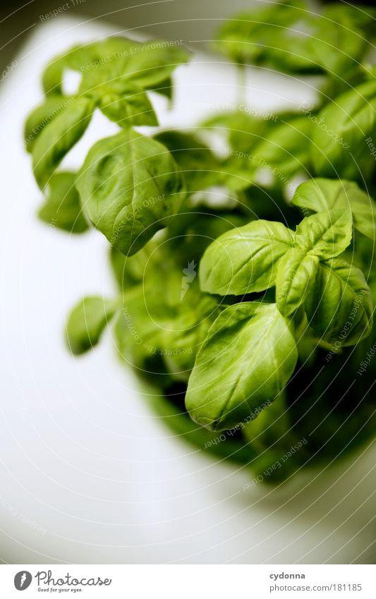 Das Zeug auf'm Mozzarella grün schön Pflanze Leben Ernährung Gesundheit Wachstum einzigartig Küche Kochen & Garen & Backen Kräuter & Gewürze Idee Lebensfreude genießen lecker Bioprodukte