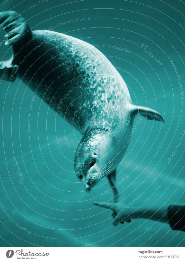JMD. AN DER NASE HERUMFÜHREN, FEAT.: ROBBN Robben Wasser Nase herumführen an der Nase herumführen blau zeigen Zeigefinger Zucht Aufzuchtstation Meer Meerestier