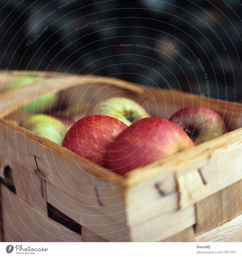 Äpfel Ernährung Lebensmittel Gesundheit Frucht nass Apfel genießen lecker Korb füttern sauer