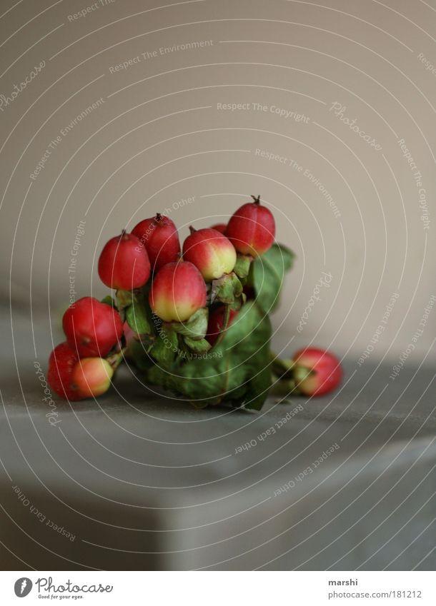 MiNiFrüchtchen Farbfoto Nahaufnahme Detailaufnahme Lebensmittel Frucht Ernährung Pflanze Blatt klein gelb grün rot winzig Beeren Johanniskraut liegen