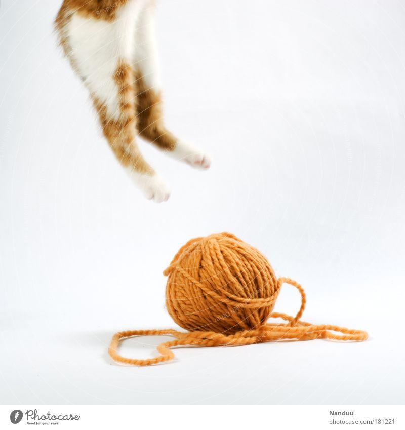 ausgespielt. Farbfoto Innenaufnahme Studioaufnahme Menschenleer Textfreiraum rechts Textfreiraum oben Bewegungsunschärfe Tier Haustier Katze 1 Tierjunges