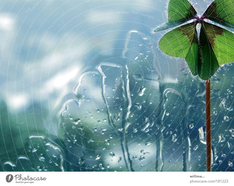 Vierblättriges Kleeblatt - Glücksklee Wassertropfen schlechtes Wetter Regen Pflanze Fenster Gefühle Lebensfreude Einsamkeit einzigartig Hoffnung Schmerz