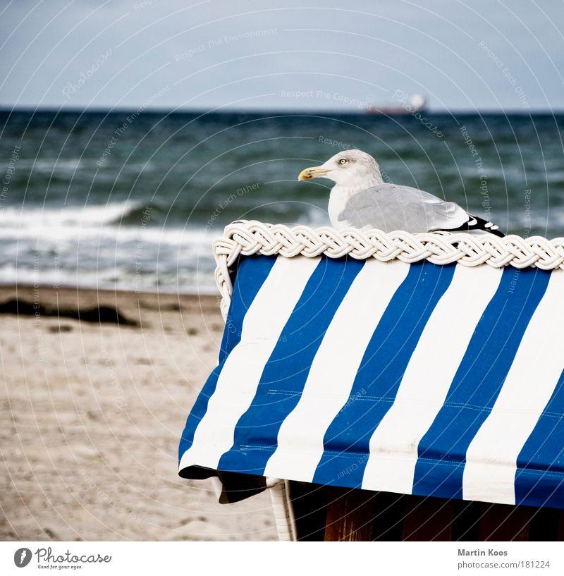 ausbrüten Natur Landschaft Sand Wasser Sommer Herbst Wetter Wellen Küste Strand Nordsee Ostsee Tier Vogel Möwe 1 beobachten Erholung frieren hocken Blick sitzen