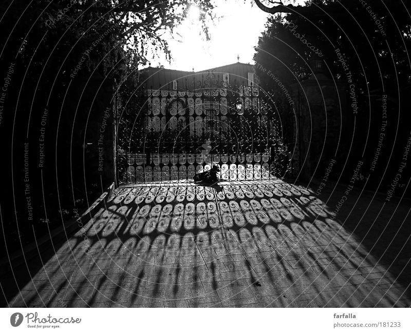 Hollywood Schwarzweißfoto Sonne Licht Gegenlicht Schatten Hund wache Haushund Villa Reichtum Los Angeles