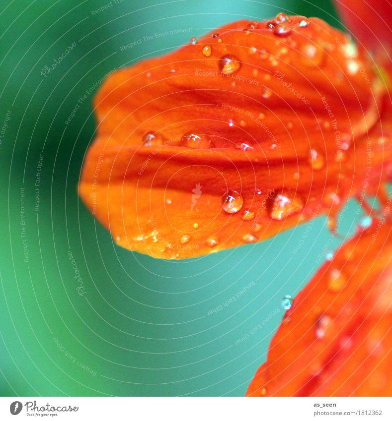 Blütenblatt schön Wellness Leben harmonisch Umwelt Natur Wasser Wassertropfen Frühling Sommer Pflanze Blume Gartenwicke Blumenstrauß Tropfen Blühend leuchten