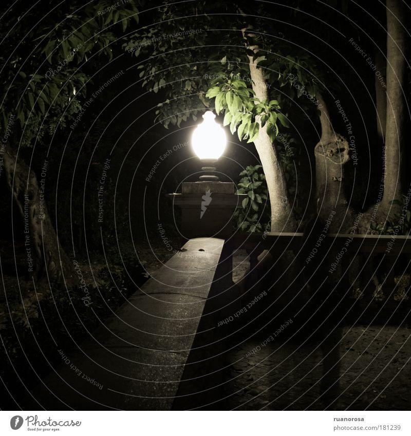 Farbfoto Außenaufnahme Nacht Kunstlicht Licht Schatten Kontrast Silhouette Landschaft Pflanze Baum Garten Park Altstadt Angst geheimnisvoll Sommernacht Lampe