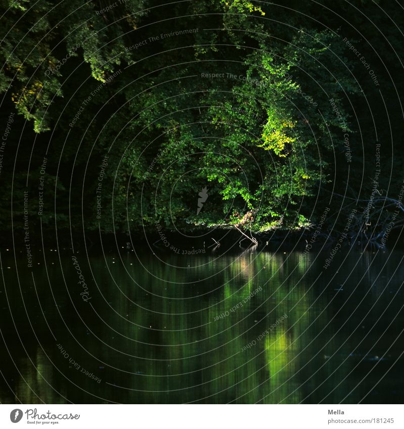 Geheimversteck Umwelt Natur Landschaft Pflanze Wasser Sommer Herbst Baum Park Seeufer Teich Wachstum dunkel natürlich grün Stimmung ruhig Einsamkeit