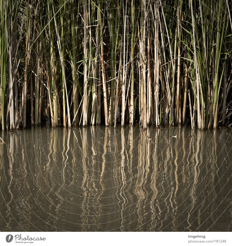 eingetaucht Natur Wasser grün Pflanze schwarz gelb dunkel Gras Linie braun glänzend Wachstum bedrohlich einfach dünn natürlich