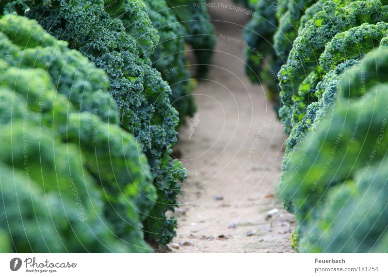 Dschungelweg? Lebensmittel Gemüse Suppe Eintopf Ernährung Mittagessen Bioprodukte Vegetarische Ernährung gut bürgerlich Winter Erntedankfest Gartenarbeit