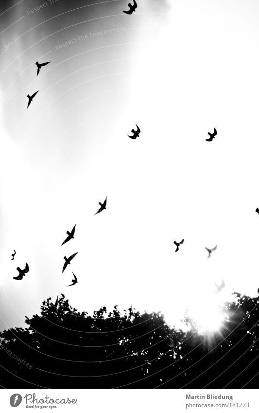 the Birds Natur Tier Tod Park Luft Stimmung Vogel Angst Umwelt Schwarzweißfoto gefährlich authentisch bedrohlich Flügel wild außergewöhnlich