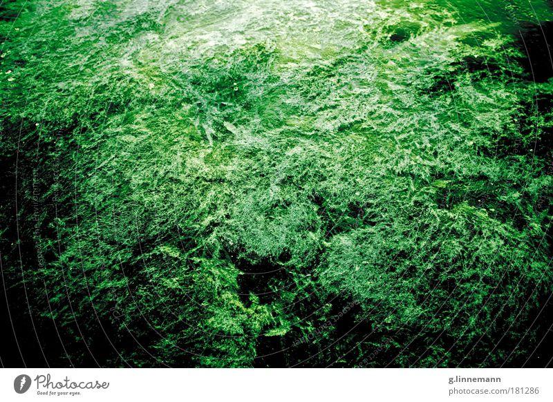 Eiskalt Natur Wasser Meer Pflanze Winter Strand kalt Schnee Herbst Frühling See Landschaft Luft Eis Wellen Wetter