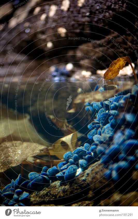 Oberlippe / Unterkante Farbfoto mehrfarbig Innenaufnahme Nahaufnahme Detailaufnahme Unterwasseraufnahme Menschenleer Kunstlicht Blitzlichtaufnahme Kontrast