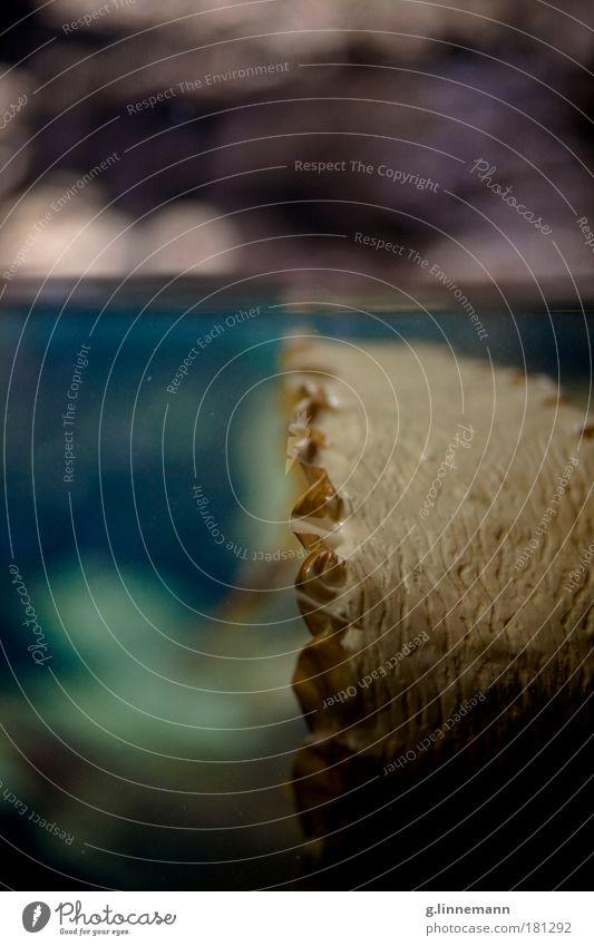Struktur Farbfoto Innenaufnahme Detailaufnahme Unterwasseraufnahme Muster Strukturen & Formen Menschenleer Kunstlicht Kontrast Totale Umwelt Natur Pflanze