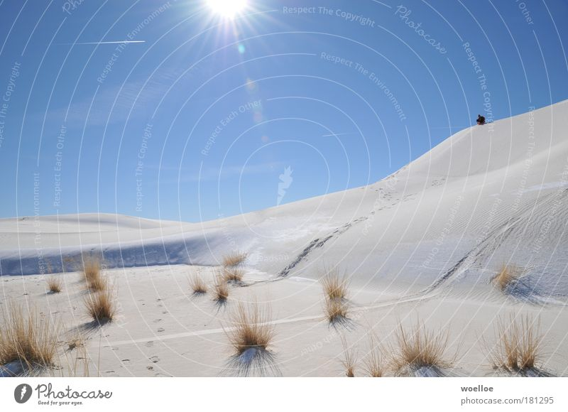 Bobfahrt in der Wüste Himmel Natur blau weiß Pflanze Sonne Winter Freude Umwelt Landschaft kalt Schnee Gras Sand hell Eis
