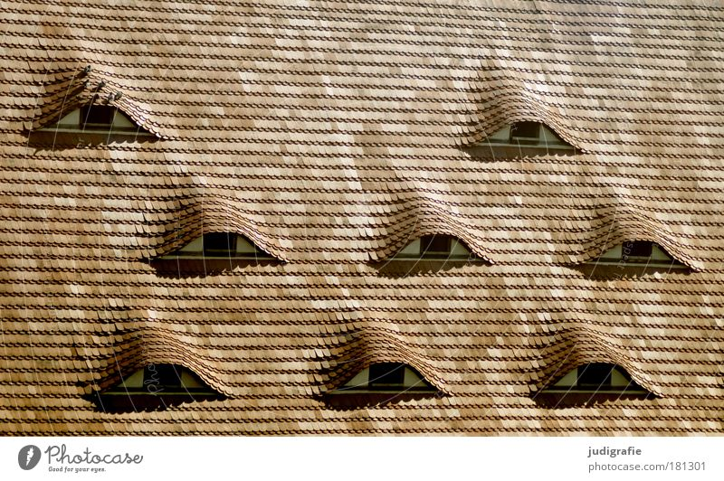 achtäugig Farbfoto Außenaufnahme Tag Haus Bauwerk Gebäude Architektur Fenster Dach Vogel Vergangenheit Wandel & Veränderung Taube Dachziegel Schindeldach