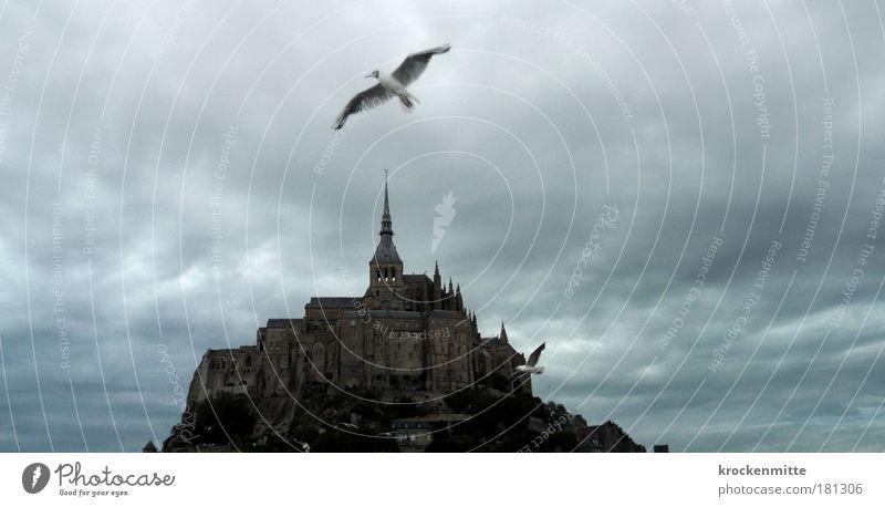 sightseeing flight weiß Wolken Tier Vogel Architektur fliegen Dach bedrohlich Flügel fantastisch gruselig Frankreich Bauwerk historisch Unwetter