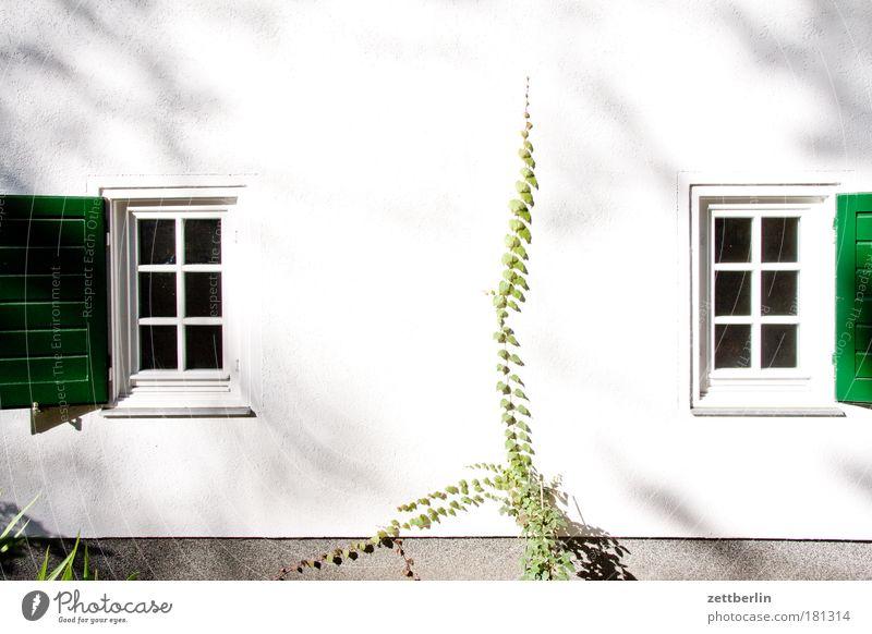Zwei Fenster weiß Sommer Haus Garten Luft offen Gardine Fensterbogen Ranke Efeu Fensterladen Lüftung Gartenhaus Schrebergarten Holzhaus
