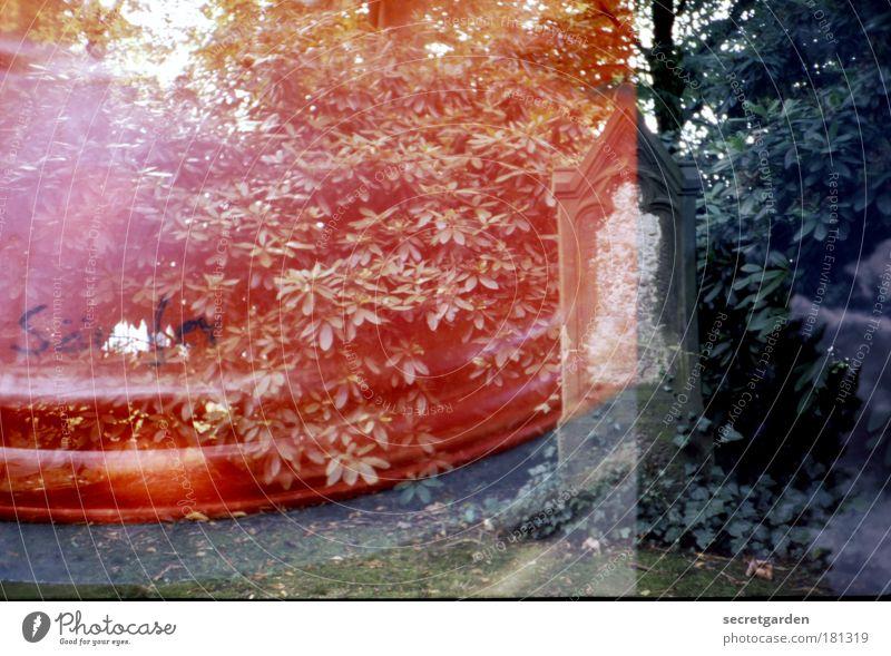 das säufer-ende. Baum grün rot ruhig Einsamkeit dunkel Gefühle Tod Stein Traurigkeit Park Trauer trist Schriftzeichen Ende analog