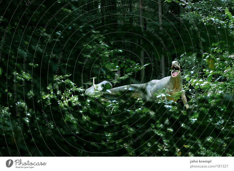 espiritu santo Pflanze Baum grün schwarz Tier Wald Angst Tierpaar Abenteuer gefährlich Tiergruppe beobachten Zoo gruselig Farbfoto Jagd