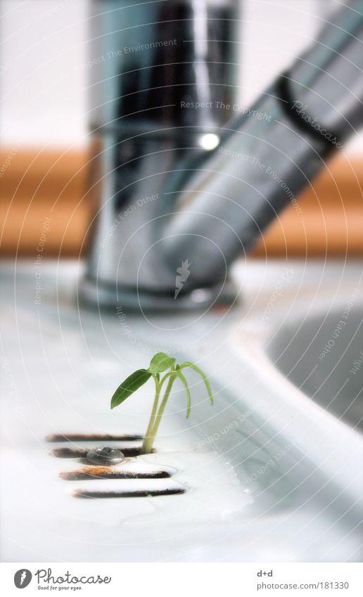 Y Natur Pflanze Leben Gras Freiheit Erfolg Energie frei Raum Wachstum Küche Ziel außergewöhnlich Abfluss Wasserhahn Willensstärke