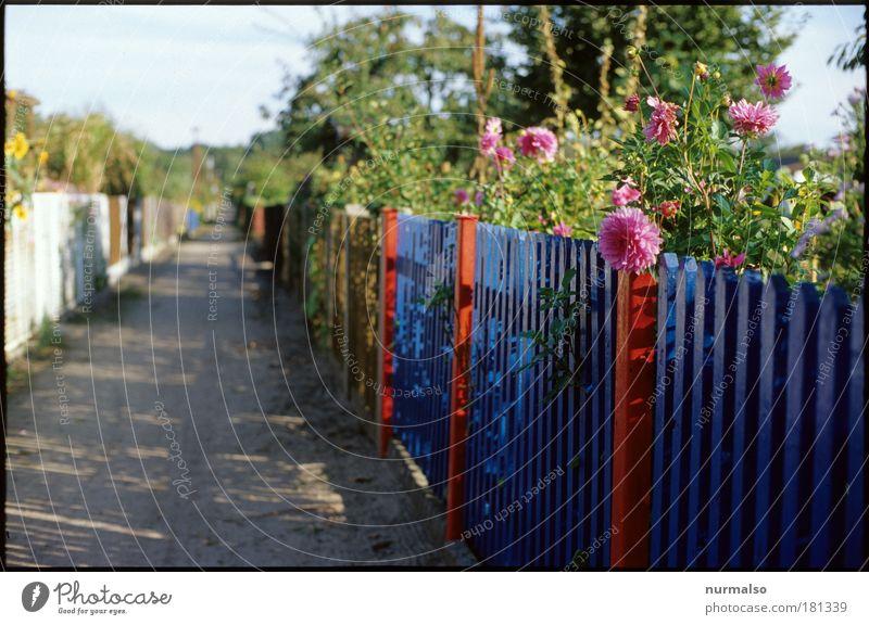 Schrebers Road Natur Pflanze Sommer Blume Umwelt Wege & Pfade Garten Freizeit & Hobby Häusliches Leben Dekoration & Verzierung Lifestyle einzigartig Kommunizieren Schönes Wetter Freundlichkeit Zaun