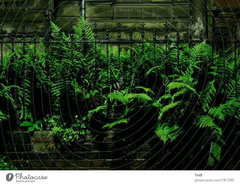 fern vs fence Natur grün Pflanze schwarz Haus Wand Garten Gebäude Mauer braun Tür Fassade glänzend Bauwerk Dorf Tor